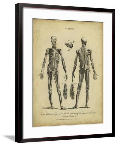 Anatomy Study II-Jack Wilkes-Framed Art Print