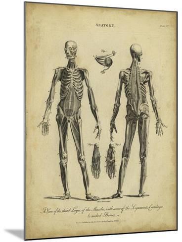 Anatomy Study II-Jack Wilkes-Mounted Art Print