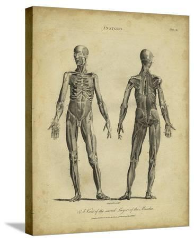 Anatomy Study III-Jack Wilkes-Stretched Canvas Print