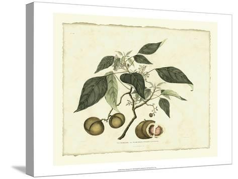 Delicate Botanical II-Samuel Curtis-Stretched Canvas Print