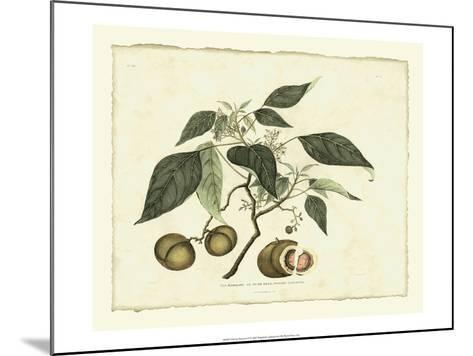 Delicate Botanical II-Samuel Curtis-Mounted Art Print
