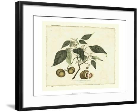 Delicate Botanical II-Samuel Curtis-Framed Art Print
