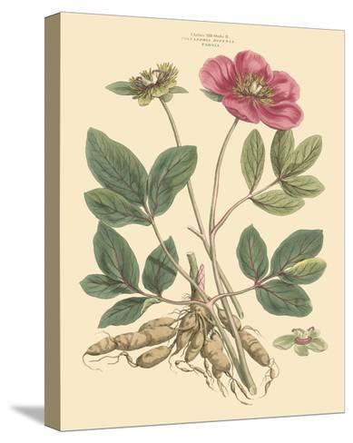 Blushing Pink Florals I-John Miller (Johann Sebastien Mueller)-Stretched Canvas Print