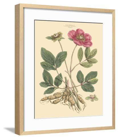 Blushing Pink Florals I-John Miller (Johann Sebastien Mueller)-Framed Art Print