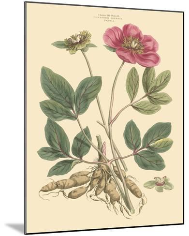 Blushing Pink Florals I-John Miller (Johann Sebastien Mueller)-Mounted Art Print