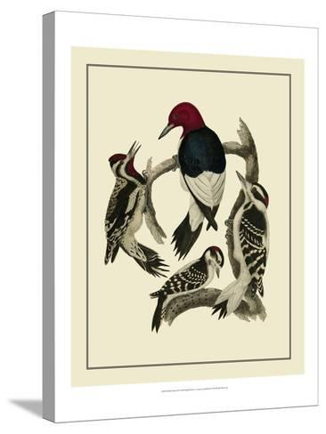 Bird Family III-A^ Lawson-Stretched Canvas Print