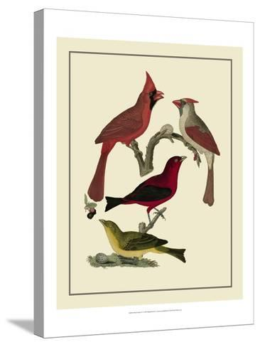 Bird Family IV-A^ Lawson-Stretched Canvas Print