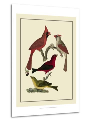 Bird Family IV-A^ Lawson-Metal Print