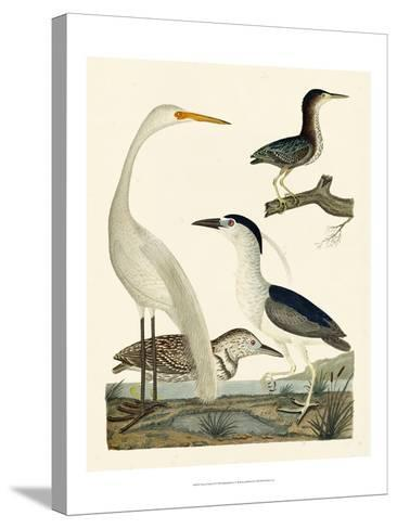 Heron Family II-A^ Wilson-Stretched Canvas Print