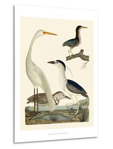 Heron Family II-A^ Wilson-Metal Print