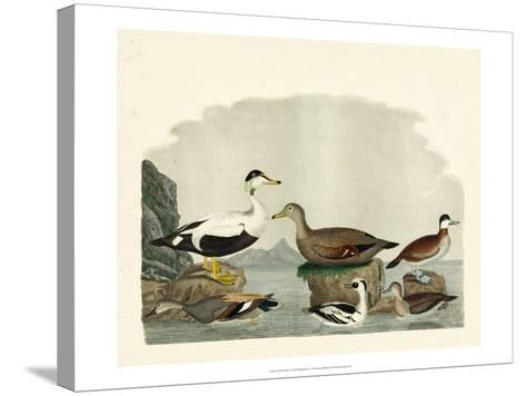 Duck Family I-A^ Wilson-Stretched Canvas Print
