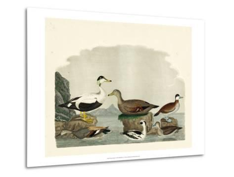 Duck Family I-A^ Wilson-Metal Print
