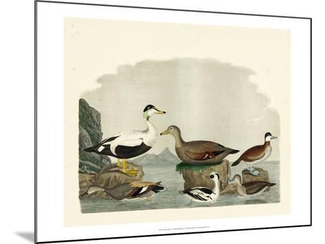 Duck Family I-A^ Wilson-Mounted Art Print
