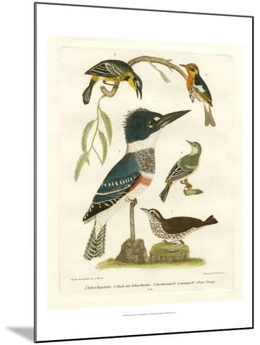 Antique Kingfisher I-Alexander Wilson-Mounted Art Print