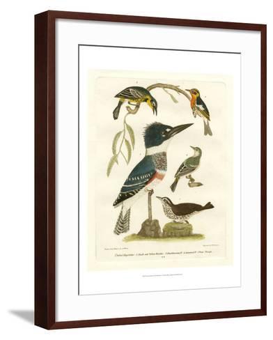 Antique Kingfisher I-Alexander Wilson-Framed Art Print