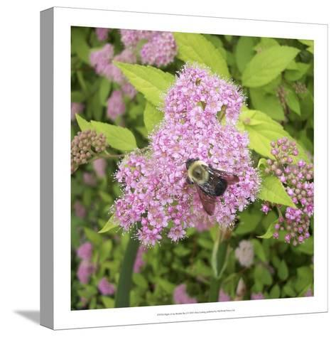 Flight of the Bumble Bee I-Alicia Ludwig-Stretched Canvas Print