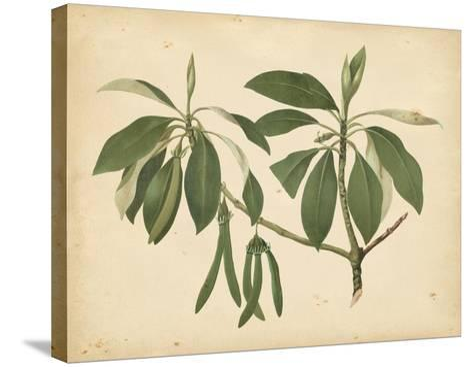 Nature's Greenery IX--Stretched Canvas Print