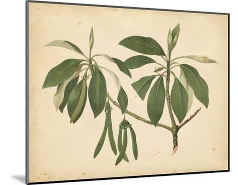 Nature's Greenery IX--Mounted Art Print