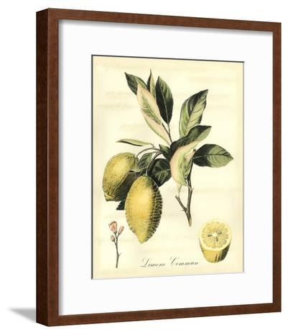 Printed Tuscan Fruits II-Vision Studio-Framed Art Print