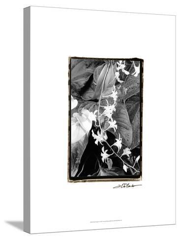 Floral Elegance I-Laura Denardo-Stretched Canvas Print