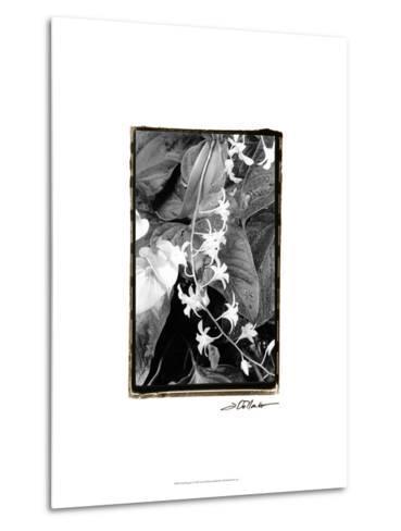 Floral Elegance I-Laura Denardo-Metal Print