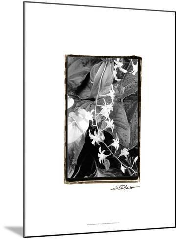Floral Elegance I-Laura Denardo-Mounted Art Print