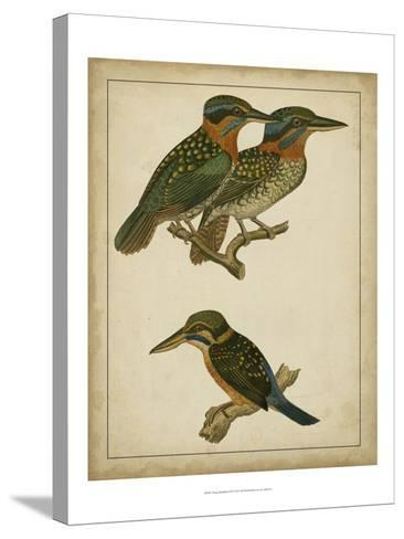 Vintage Kingfishers III--Stretched Canvas Print