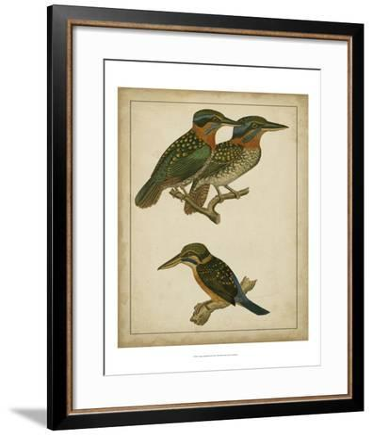 Vintage Kingfishers III--Framed Art Print