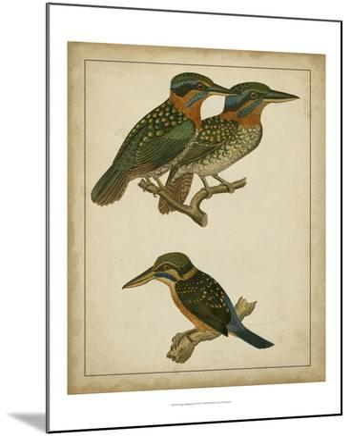 Vintage Kingfishers III--Mounted Art Print