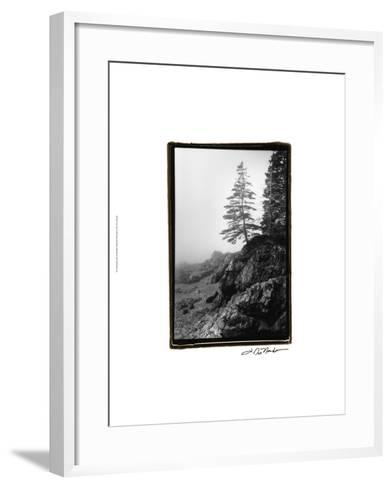 Lone Tree-Laura Denardo-Framed Art Print
