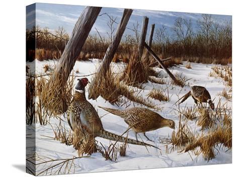 Daybreak-Kevin Daniel-Stretched Canvas Print