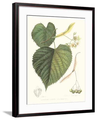 Non-embellished American Linden-Sprague-Framed Art Print