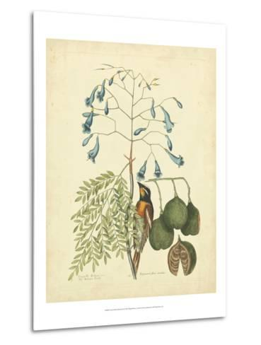 Catesby Bird & Botanical II-Mark Catesby-Metal Print