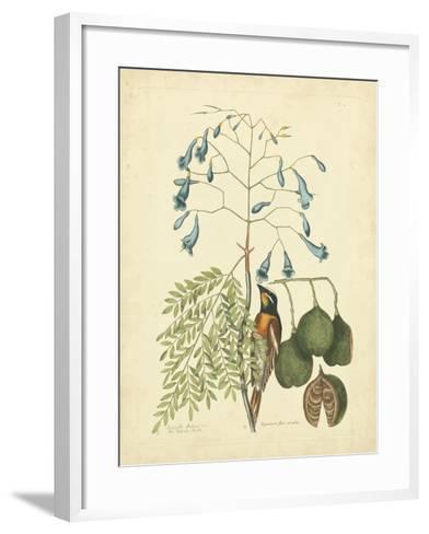 Catesby Bird & Botanical II-Mark Catesby-Framed Art Print
