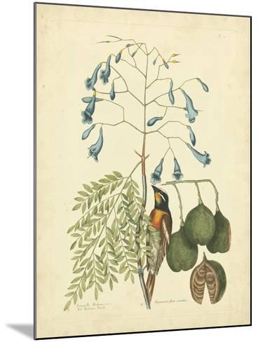 Catesby Bird & Botanical II-Mark Catesby-Mounted Art Print
