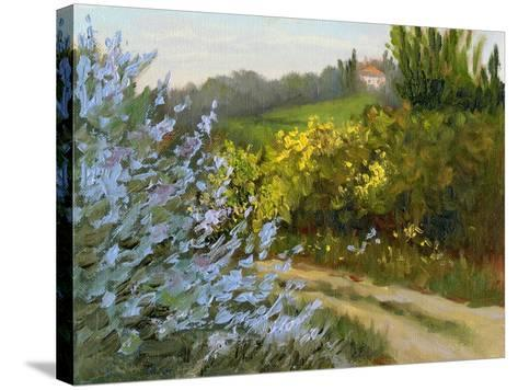 Rosemary by the Road-Mary Jean Weber-Stretched Canvas Print