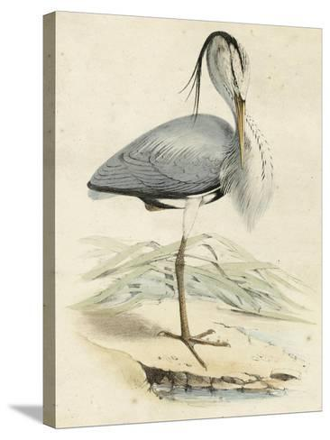 Antique Heron IV--Stretched Canvas Print