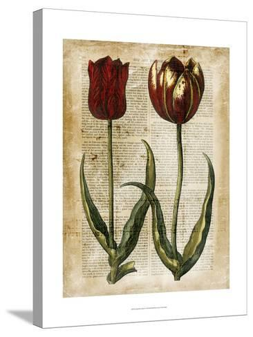 Antiquarian Tulips IV--Stretched Canvas Print