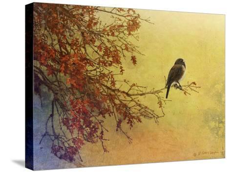 Snow Oak Junco-Chris Vest-Stretched Canvas Print