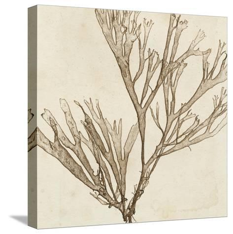 Brilliant Seaweed VII--Stretched Canvas Print