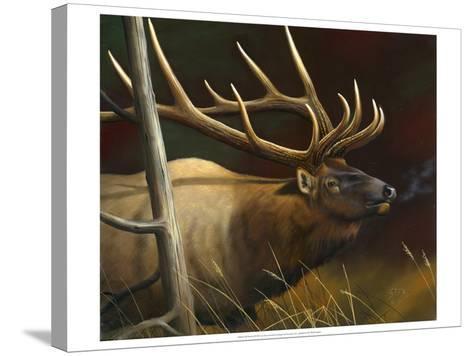 Elk Portrait II-Leo Stans-Stretched Canvas Print