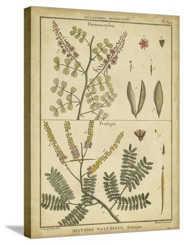 Diderot Antique Ferns II-Daniel Diderot-Stretched Canvas Print