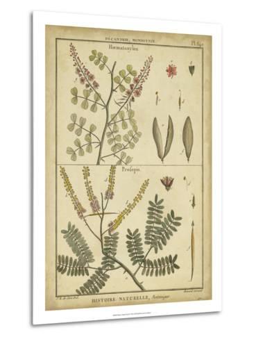 Diderot Antique Ferns II-Daniel Diderot-Metal Print