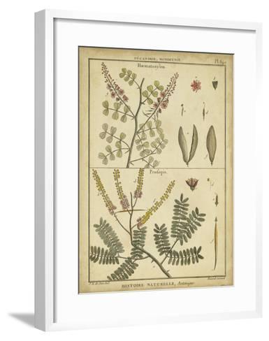 Diderot Antique Ferns II-Daniel Diderot-Framed Art Print