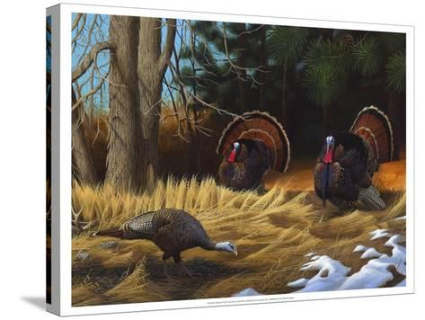 Turkies-Leo Stans-Stretched Canvas Print