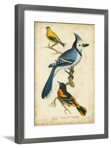 Wilson's Blue Jay-Alexander Wilson-Framed Art Print