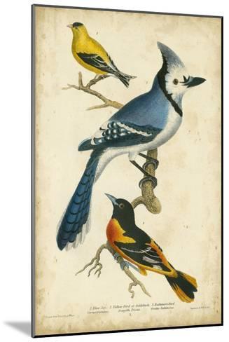 Wilson's Blue Jay-Alexander Wilson-Mounted Art Print