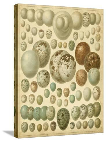 Vintage Bird Eggs I--Stretched Canvas Print