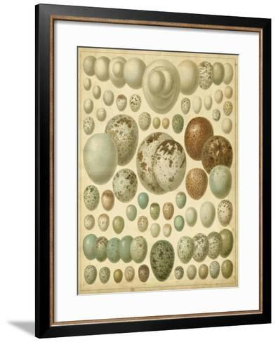 Vintage Bird Eggs I--Framed Art Print