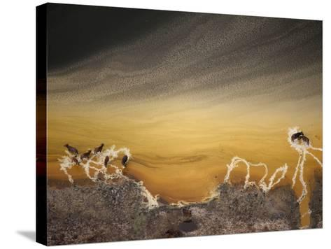 Water buffalo and mineral deposits along the shore of a crater lake.-Joel Sartore-Stretched Canvas Print